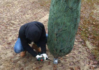 Baum festschrauben